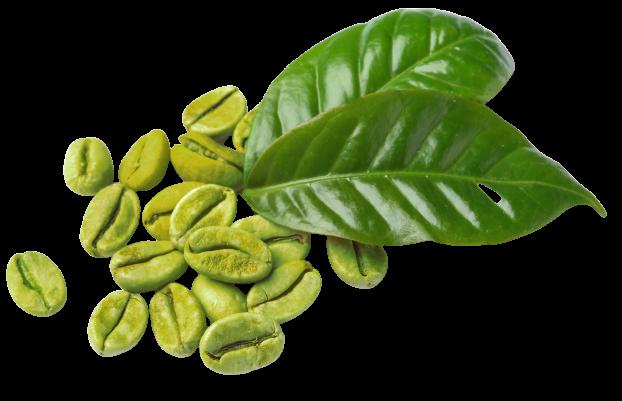 Najboljsi antioksidant
